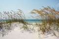 Sunny ocean beach dunes with sea oats view through sparkling white sand and mature golden to the blue green scene at the gulf of Stock Photo
