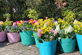 Sunny terrace with a lot of flowers in the vivid pots Stock Image