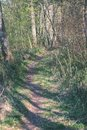 sunny tourist trail in the woods in autumn - vintage look