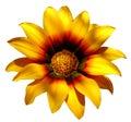 Sunny yellow flower