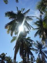Sunrays covered by the coconut trees Stock Photos