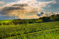 Sunrays and field with cut grass Royalty Free Stock Photo