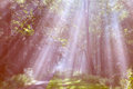 Sunrays in a moody image are falling into a humid forest resulting in beautiful beams of light in breda the netherlands Royalty Free Stock Photography
