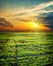 Sunrays over green field Royalty Free Stock Images