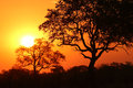 Sunrise african in namibia africa Royalty Free Stock Photos