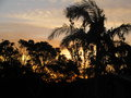 Sunrise in Australia Through the Trees Royalty Free Stock Photo