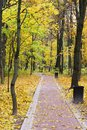 Sunrise in autumn forest. Walking path in the Park autumn day