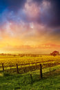 Sunrise in the barossa valley Stock Images