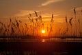 Sunrise at Cae Glas Royalty Free Stock Image