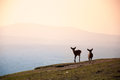 Sunrise deer silhouette on the top of mountain in Nara