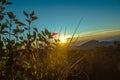 Sunrise in doi intanon Stock Image