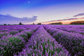 Sunrise and dramatic clouds over Lavender Field Royalty Free Stock Photo