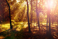 Sunrise in the forest with light shafts and shadows Royalty Free Stock Photo