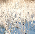 Sunrise frozen plants Royalty Free Stock Photo
