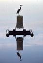 Sunrise Heron Royalty Free Stock Photo
