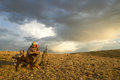 Sunrise hunter and dogs in moody arid landscape Royalty Free Stock Photo