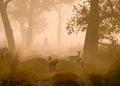Sunrise on the jungle, Bardia national park, Nepal Royalty Free Stock Photo