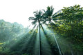 Sunrise in the jungle. Royalty Free Stock Photo