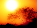 Sunrise misty morning tree silhouette rising huge red sun Stock Images