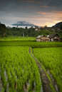 Sunrise over the bali rice fields some of most beautiful and dramatic terraces can be found near small village of sidemen in Royalty Free Stock Image