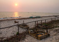 Sunrise over beach with dog and fishing boats Royalty Free Stock Photo