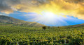 Sunrise over a grape field in mountains vineyards in the crimean mountains Stock Image
