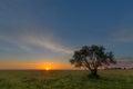 Sunrise over green veld Royalty Free Stock Photo