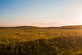 Sunrise over the Pasture Royalty Free Stock Photo