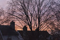 Sunrise over rooftops the morning sun rising and bare tree branches Stock Photo
