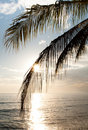 Sunrise and palm tree Royalty Free Stock Photos