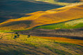 Sunrise at Palouse Hill Royalty Free Stock Image
