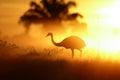 Sunrise in Pantanal, Brazil