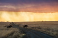Sunrise rain wildebeest in South Africa Royalty Free Stock Photo