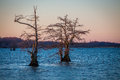 Sunrise on Reelfoot Lake Royalty Free Stock Photo
