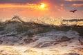 Sunrise and shining waves Royalty Free Stock Photo