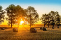 Sunrise summer field Royalty Free Stock Photo