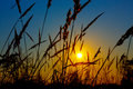 Sunrise on summer wheat field with meadow grass the Stock Images