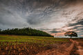 Sunrise thailand landscape in pineapple field Stock Photos