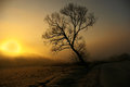 Sunrise tree beautiful with soft warm background captured during winter Royalty Free Stock Photos