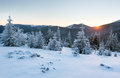 Sunrise winter mountain landscape with fir trees the first rays of the sun and snowy on slope Royalty Free Stock Photo