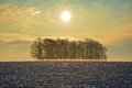 Sunrise In Winter With Tree An...