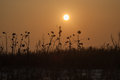 Sunset above the winters field and grass sun dry Royalty Free Stock Images