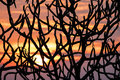 Sunset abstract with tree branches a colorful viewed through leafless of a in mexico results in an background Royalty Free Stock Photography