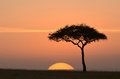 Sunset in africa africa(kanya),sun and tree,silhouette of tree and grassland Stock Photo