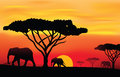 Sunset in africa vector illustration of realistic evening scenery Stock Photo
