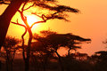 Sunset in the african bush serengeti Stock Photo