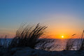 Sunset on atlantic ocean, beach grass silhouette in France Royalty Free Stock Photo