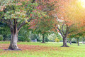 Sunset in autumn view of treew at the Royalty Free Stock Photo