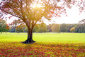 Sunset in autumn view of treew at the Royalty Free Stock Image