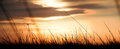Sunset background shot of silhouetted grass through a golden with glorious clouds in the sky Royalty Free Stock Photo